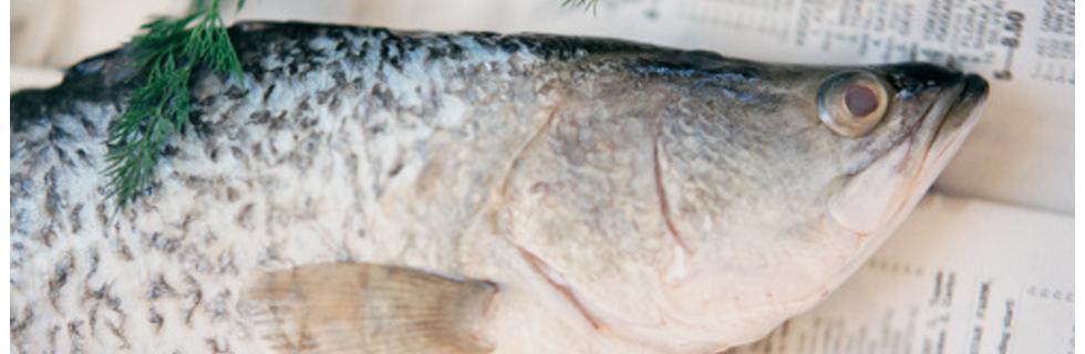 Coast Tsimshian Seafood